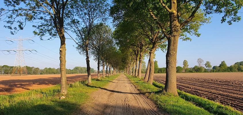 Wandeling over het Broeksteenpad in Rijkevoort