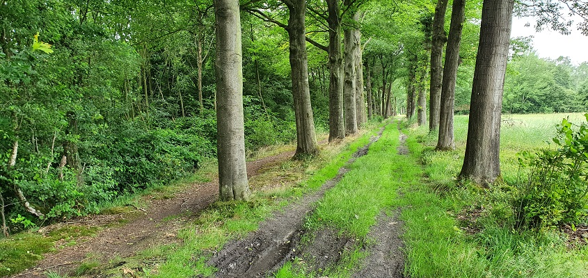 Trage Tocht Leusveld bij landgoed Groot Engelenburg