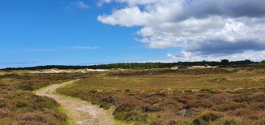 Wandeling op Terschelling van West naar Hoorn op de Landerummerheide