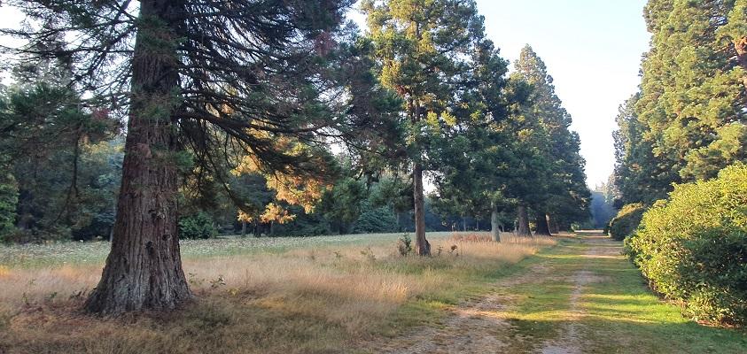 Wandeling over Andreas Schotel wandelroute in Esbeek bij sequoais in arboretum Landgoed de Utrecht