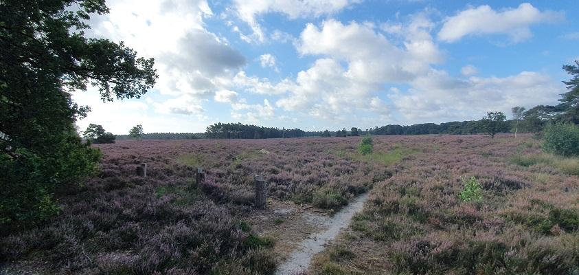 Wandeling over Roots Natuurpad van Landgoed Tongeren naar Apeldoorn bij de Tongerense Heide