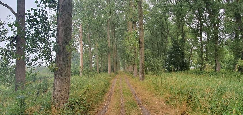 Wandeling van Vught naar Den Bosch van de Paadjesmakers bij landgoed Haanwijk