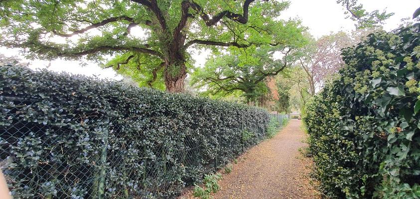 Historische wandeling Boekel Toen en Nu