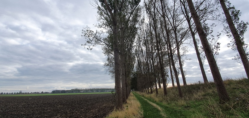 Wandeling over het Grenslandpad van Kloosterzande naar Terneuzen bij de Hengstdijk