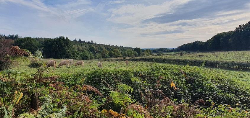Wandeling over Trage Tocht Plasmolen-Mook bij het Zevendal