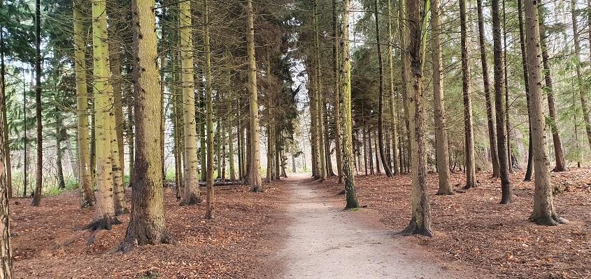 IVN-wandeling Groote Beek Eindhoven