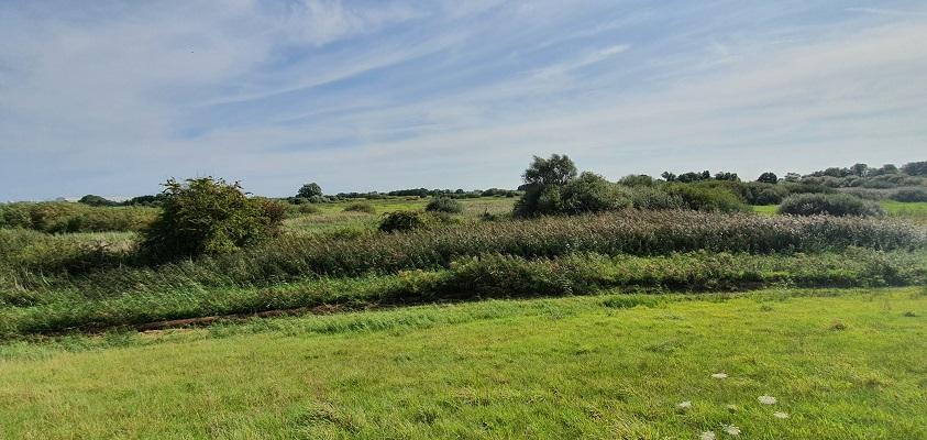 Wandeling over het Groot Frieslandpad van Bellingwolde naar Papenburg bij de uiterwaarden van de Eems