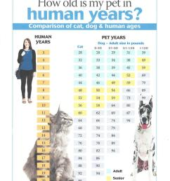 the chart below converts human years to dog and cat years relative to their weight this handy chart will help you stay on top of your pet s age even if you  [ 860 x 1114 Pixel ]