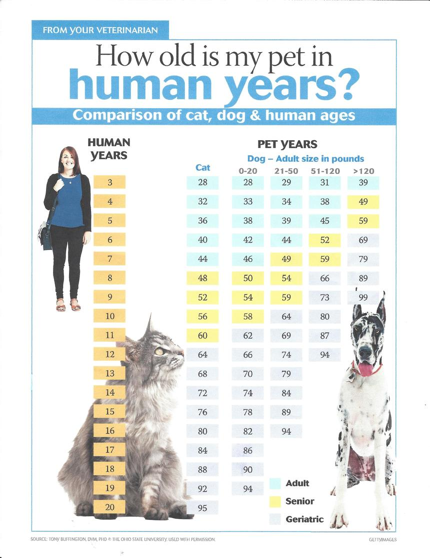 hight resolution of the chart below converts human years to dog and cat years relative to their weight this handy chart will help you stay on top of your pet s age even if you