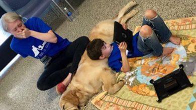 Photo of Όταν ένα αυτιστικό αγόρι, που δεν επιτρέπει σε κανέναν να τον αγγίξει, συναντά τον νέο του σκύλο