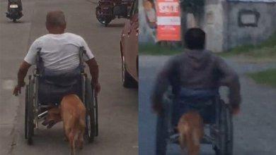 Photo of Πιστός σκύλος βοηθάει το αφεντικό του που είναι καθηλωμένο σε αναπηρικό αμαξίδιο (pics)