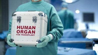 Photo of Φλώρινα: Δωρίζουν τα όργανά του οι γονείς του 16χρονου που δηλητηριάστηκε από μανιτάρια