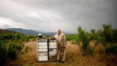 Photo of «Σα να στέλνουμε τις μέλισσες σε πόλεμο»: Η θανάσιμη αλήθεια πίσω από το γάλα αμυγδάλου