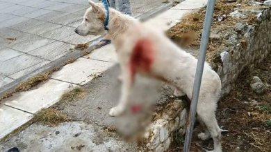 Photo of Άρειος Πάγος για κακοποίηση ζώων: Συλλήψεις και αυτόφωρο για τους δράστες