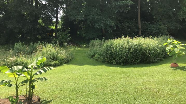 jardin Patrick 4