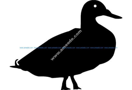 Animals Duck