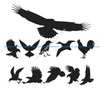 Free Vector Birds Pack