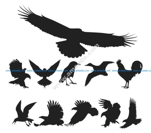 Free Vector Birds Pack