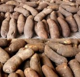 Nigeria lack right storage, processing facilities, quality control to achieve yam export drive -stakeholder