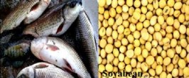 Morenike highlights the importance of fish and soyabean protein as crucial diets for Nigerians