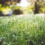 herbe tondeuse à gazon