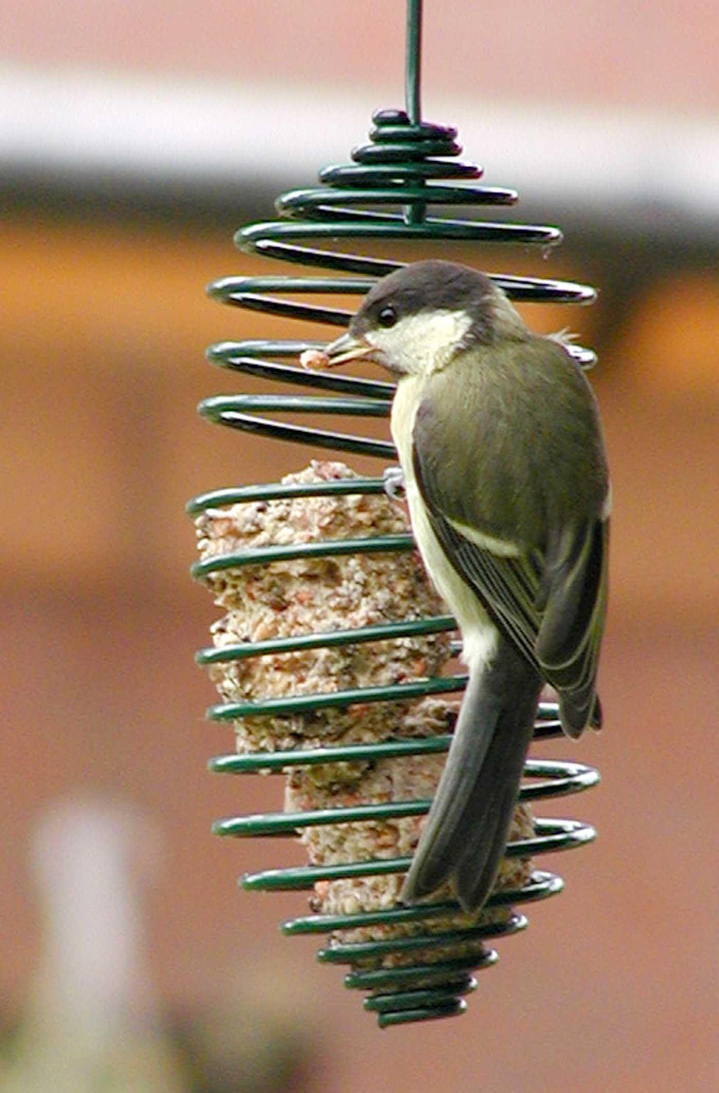 Mangeoire oiseaux jardin ou terrasse