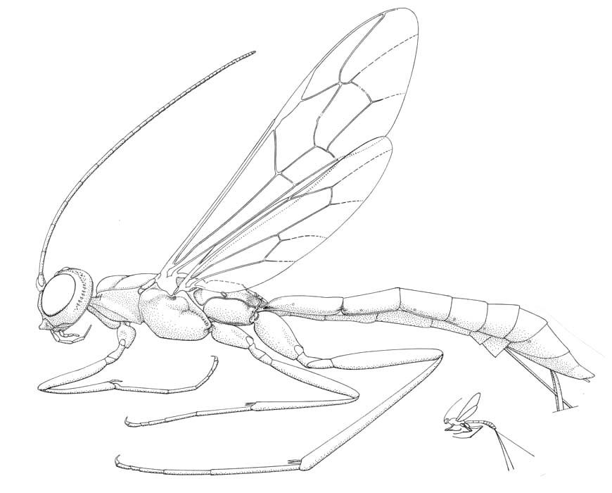 American Entomological Institute