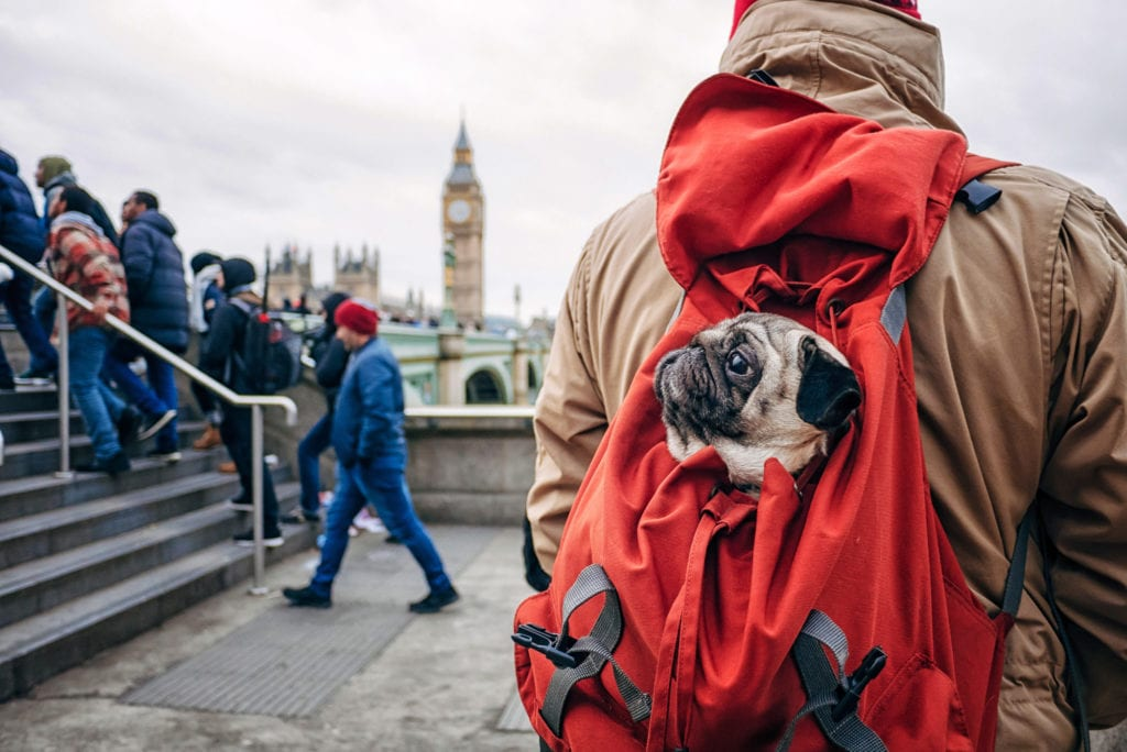 man carrying a small dog in a backpack carrier