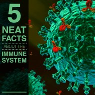 5 Neat Facts You Didn't Know about the Immune System