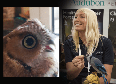 "Carrie Barron will be presenting ""Bird of Prey"" at the 2018 American Birding Expo."