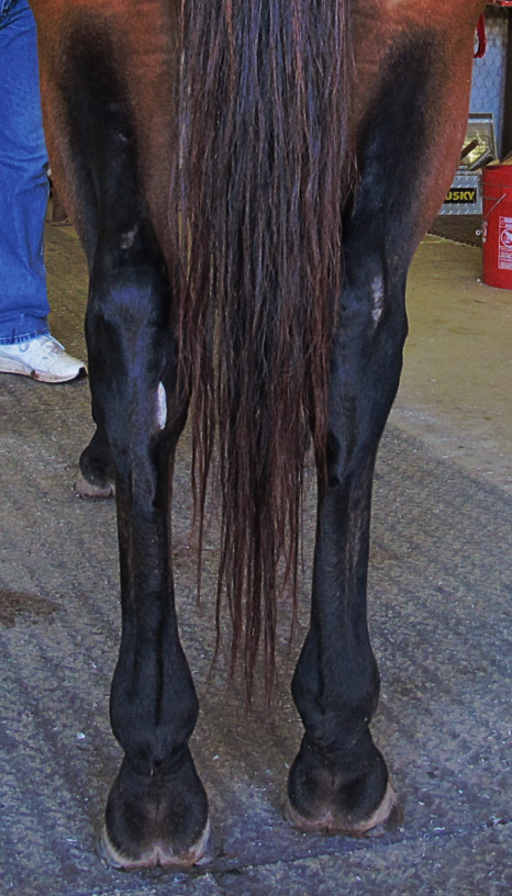 Farrier Tips Working With A BaseNarrow Horse  American