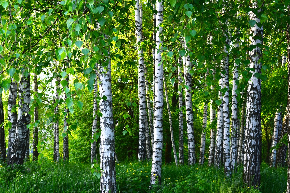 Forests as Carbon Sinks  American Forests