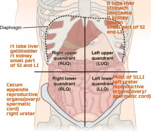 Przewodnik po kodach dla Bladder, Gallbladder, Liver Ultrasound CPT code