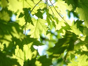 Ensure the health of your native trees.