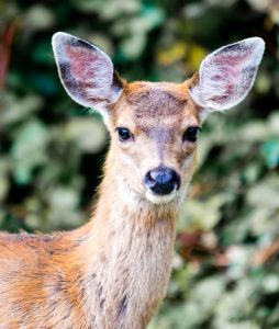 4 Natural Ways to Discourage Deer From Eating Native Plants