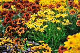 american native plants in a sustainable landscaping garden