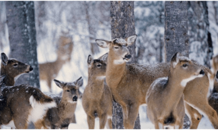 Guest Post: Hunting In The Woods – Top 7 Tips For Beginners