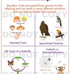 32 Inherited Traits Worksheet 5th Grade - Worksheet Resource Plans [ 3348 x 2484 Pixel ]