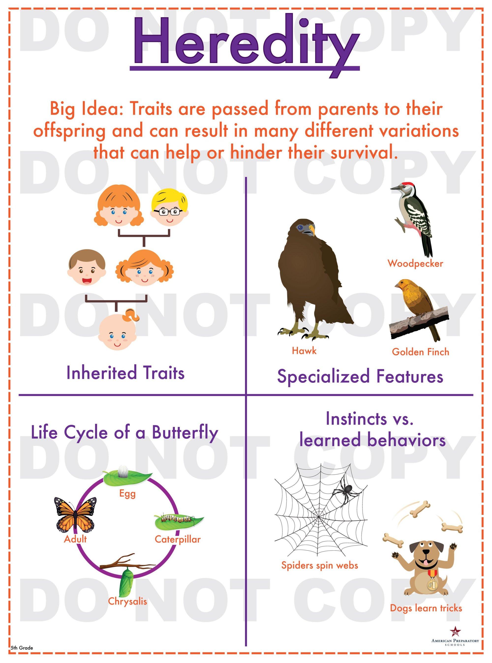 hight resolution of 32 Inherited Traits Worksheet 5th Grade - Worksheet Resource Plans
