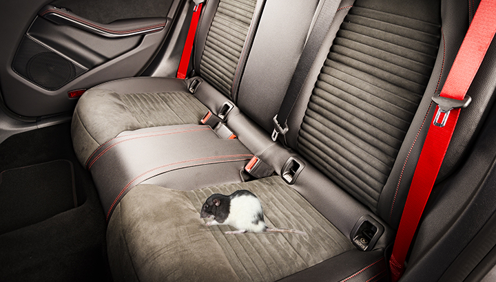 A Traveling Infestation - Mice in Your Car - American Rat Control
