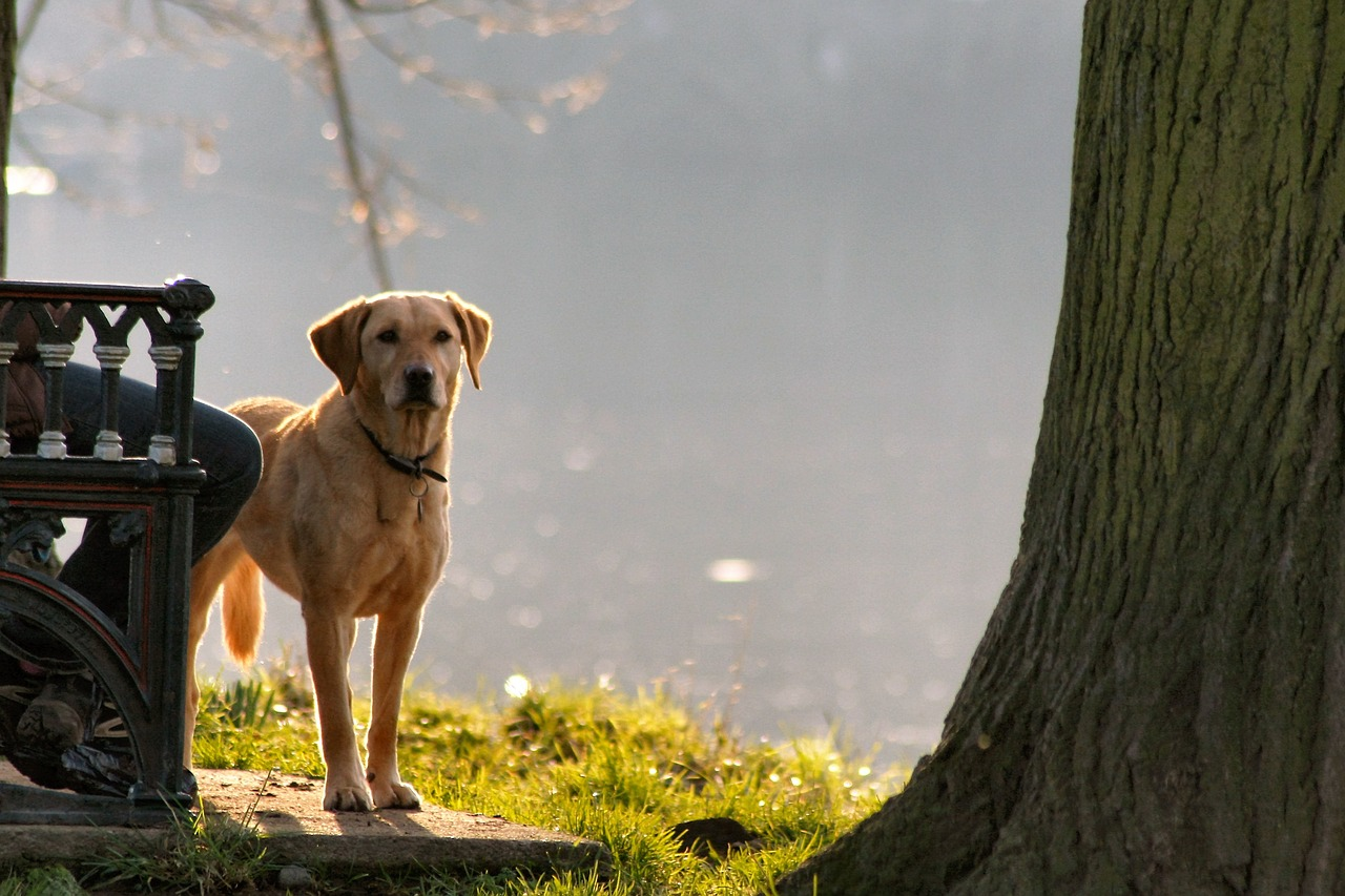 Dog friendly vacations in the midwest