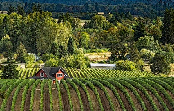 The Willamette Valley may be the best wine region in the US