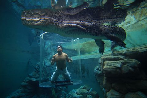 plonger crocodile australie