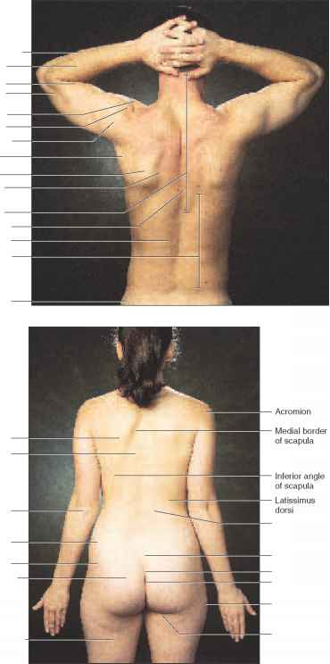 triceps brachii diagram one room electrical wiring the importance of external anatomy - physiology