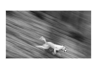 11 ian ziua artei fotografice (8)