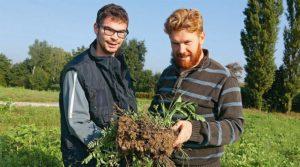 Emeric Ditner et son frère Jérémy: «en non-labour, les sols sont particulièrement vivants».