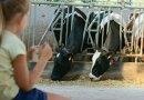 Un été à la ferme !