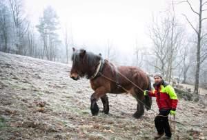 PierreSimlerEbba 013 - Quand le cheval labeur remplace le cheval vapeur