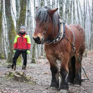 PierreSimlerEbba 040 - Quand le cheval labeur remplace le cheval vapeur