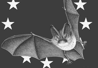 logonuitnet nb - Sortie-nature : le crépuscule des chauves-souris